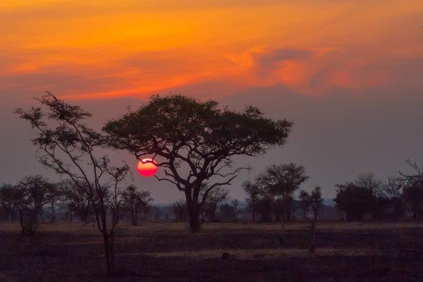 TULIP pusobi i v Africe